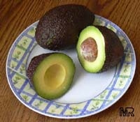 Persea americana - Avocado Florida Hass (Haas), Grafted  Click to see full-size image