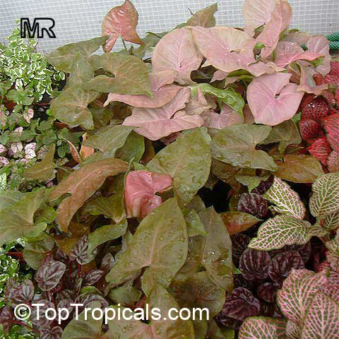 Image Result For Common Red Garden Flowers