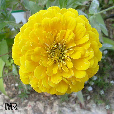 Blossom like a flower endurance endurance mightylinksfo Choice Image