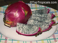 Hylocereus sp., Pitaya, Pitahaya, Dragon Fruit, Strawberry Pear