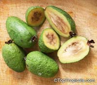 Feijoa sellowiana, Acca sellowiana, Feijoa, Pineapple Guava, GuavasteenClick to see full-size image