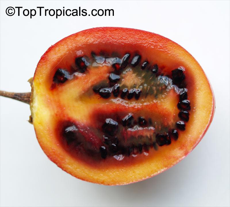 Cyphomandra Crassicaulis Cyphomandra Betacea Solanum