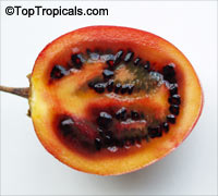 Cyphomandra betacea, Tamarillo - seeds  Click to see full-size image