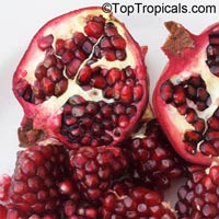 Punica granatum - Pomegranate var. Vietnam, 3 gal  Click to see full-size image