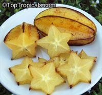 Averrhoa carambola, Carambola, Starfruit, Five-finger, BalimbingClick to see full-size image