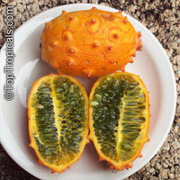 Cucumis metuliferus , African Horned Cucumber, Kiwano  Click to see full-size image