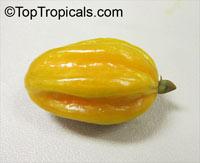 Eugenia neonitida, PitangatubaClick to see full-size image