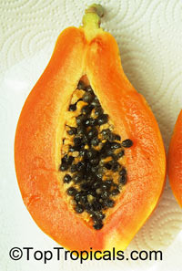 Carica papaya Solo - seeds  Click to see full-size image