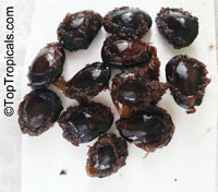 Tetrapleura tetraptera, Adenanthera tetraptera, Aidan Tree, Prekese  Click to see full-size image