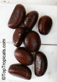 Uvariopsis submontana, UvariopsisClick to see full-size image