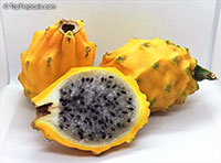 Selenicereus megalanthus, Pitaya, Pitahaya, Dragon Fruit, Strawberry Pear  Click to see full-size image