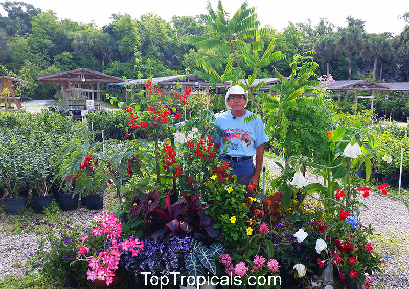 Top Tropicals Is A New Generation Of Tropical Plant It Not An Ordinary Nursery Also Information