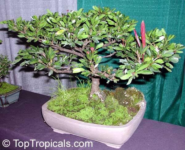 the art of bonsai pdf