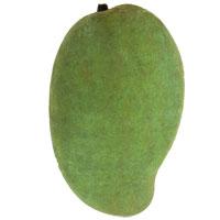 Mangifera indica - Cac Mango, GraftedClick to see full-size image