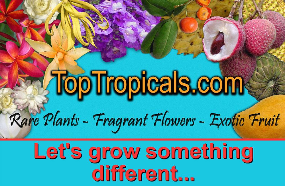 TopTropicals.com
