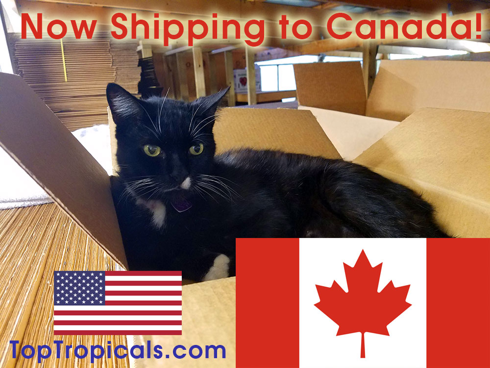 International Shipping - TopTropicals com
