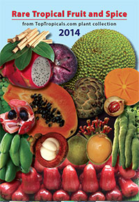 Top Tropicals Fruit Book - Rare Tropical Fruit and Spice