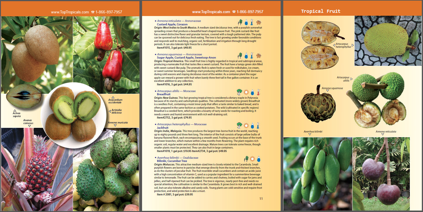spice crops This book is concerned with the profitable production of spice crops at all levels of management, more efficient processing and greater utilization.