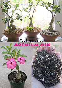 Adenium Soilless Mix, 2 gal bag  Click to see full-size image