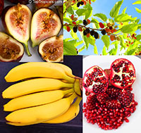 Tropical Fruit Starter Collection - 4 plants for price of 2  Click to see full-size image