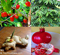 Super Foods Bundle Collection - 4 plants for price of 2  Click to see full-size image