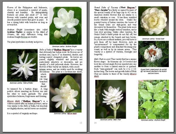 Jasminum Sambac Absolute Flower Book Toptropicals Com