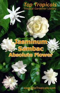 Jasminum Sambac Absolute Flower - book - PDF file download   Click to see full-size image