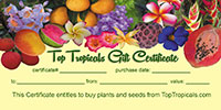 Gift certificate  Click to see full-size image