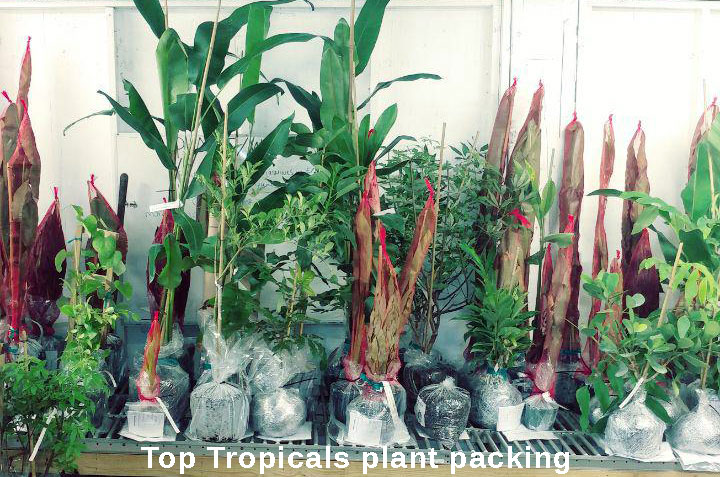To Save You Money On Shipping We Work Minimize Both Package Weight And Dimensions See Our Products Page Size Of Plants For More Information