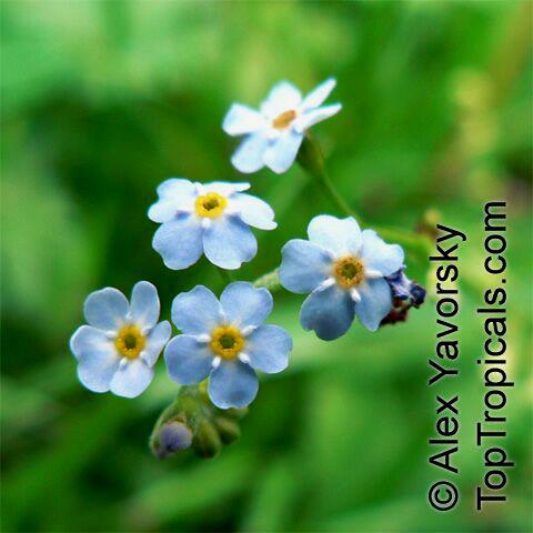 Цветок с нектаром 7 букв