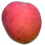 http://www.toptropicals.com/pics/tropics/articles/fruits/mango_cultivars/09.jpg