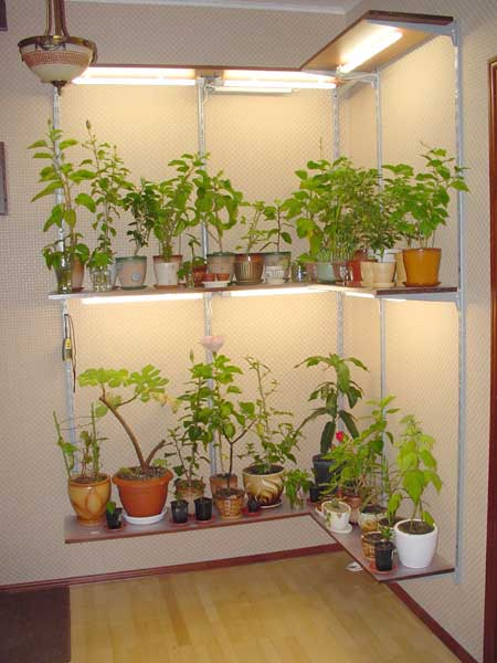 how to make an indoor greenhouse for your apartment