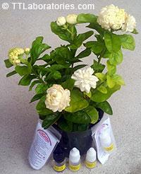 SUNSHINE-E - plant booster, 5 ml