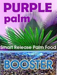 Purple Palm Food - Smart Release Palm Booster  Click to see full-size image